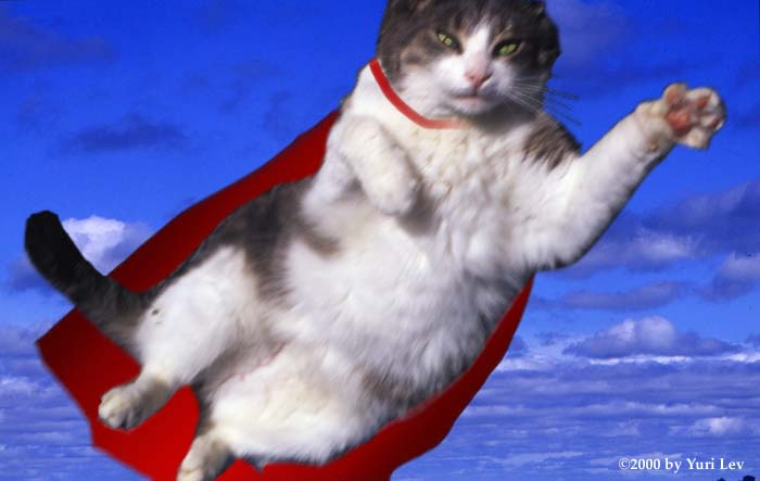 """See 9 of the best Tara the """"supercat"""" memes (with images, tweets ..."""